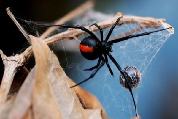 Του επιτέθηκε δηλητηριώδης αράχνη και δάγκωσε το μόριο του - Αυτό που ακολούθησε θα σας κάνει να