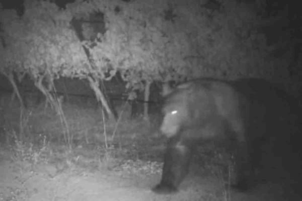 Βλέπετε μια τρομακτική αρκούδα μέσα στο σκοτάδι  - Αν παρατηρήσετε καλύτερα τη φωτογραφία θα δείτε κάτι απίστευτο