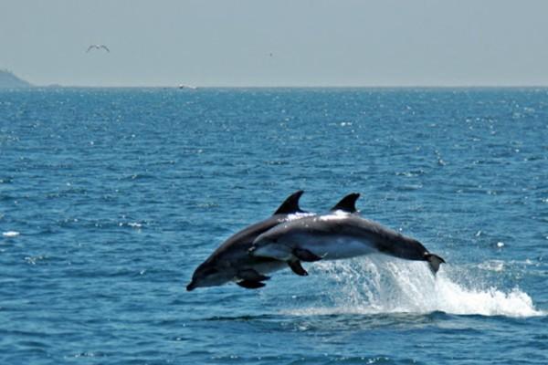 Υπέροχες εικόνες: Ο κορωνοϊός έφερε… τα δελφίνια στο Βόσπορο