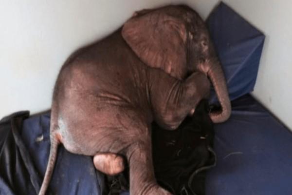 Άρρωστο ελεφαντάκι έμεινε μόνο του όταν η αγέλη το εγκατέλειψε- Τότε συνέβη κάτι το συνταρακτικό
