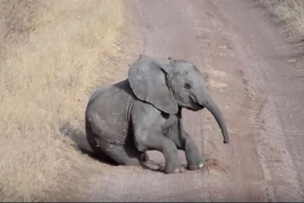 Αυτός το ελεφαντάκι έκατσε στη μέση του δρόμου και φερόταν παράξενα - Τότε συνέβη κάτι το αναπάντεχο