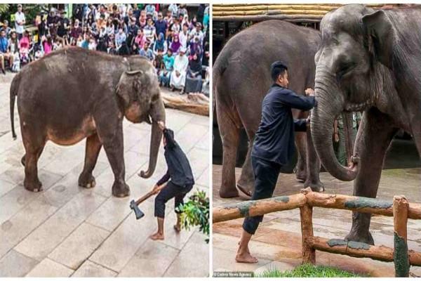 Σοκ: Κάμερα καταγράφει υπαλλήλους να μαχαιρώνουν και σφάζουν ελέφαντες σε γνωστό ζωολογικό κήπο για εκτόνωση