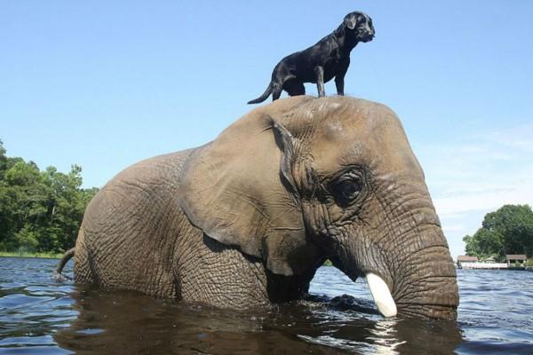 Αυτός ο σκύλος έχει για καλύτερο του φίλο έναν... ελέφαντα - Η ιστορία τους θα σας κάνε να λιώσετε!