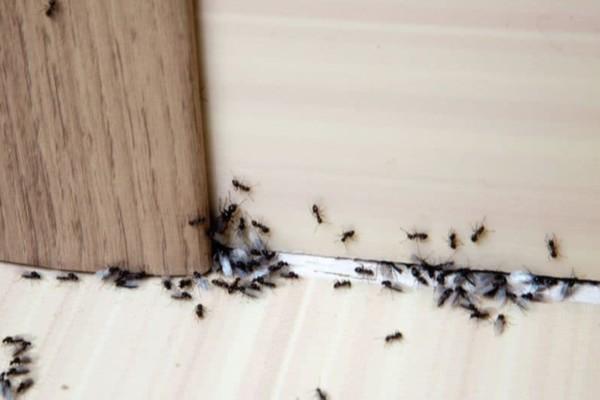 9+1 φυσικοί τρόποι για να εξαφανίσετε τα μυρμήγκια από το σπίτι - Το μυστικό κόλπο με την κανέλα