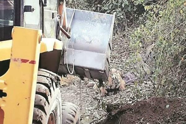 Προσπάθησαν να σώσουν μια τίγρη με έναν εκσκαφέα - Αυτό που έγινε λίγα λεπτά μετά θα σας