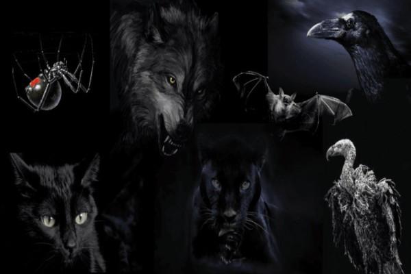 Διαλέξτε ένα από τα 7 ζώα - Θα σας δείξει την σκοτεινότερη πτυχή της προσωπικότητάς σας