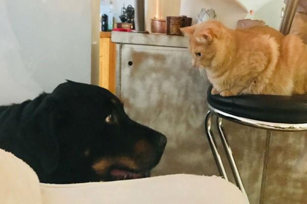 Συναγερμός: Τρεις γάτες και ένας σκύλος θετικοί στον κορωνοϊό