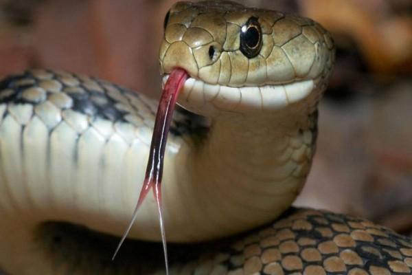 Τεράστιο φίδι τρομοκρατεί μεγάλη πόλη της Ελλάδος!