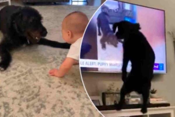 Θα τον  λατρέψετε: Αυτός ο σκύλος βλέπει τον εαυτό του στις ειδήσεις και από την χαρά του κάνει το απίστευτο