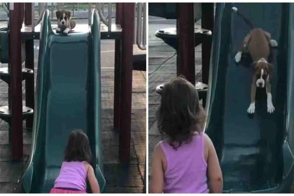 Θα λιώσετε: Κάμερα καταγράφει 2χρονο κοριτσάκι να μαθαίνει στο κουτάβι της πως να κατεβαίνει την τσουλήθρα -  Η αντίδρασή του; Μοναδική