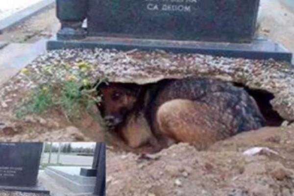 Αυτός ο σκύλος ζει μέσα σε έναν τάφο - Ο λόγος που το κάνει αυτό θα σας ανατριχιάσει