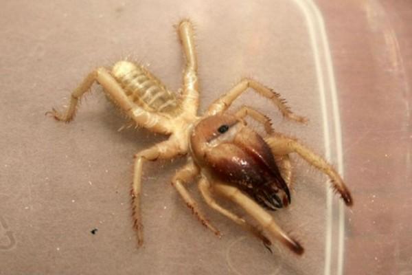 Αράχνη - Δολοφόνος στην Ελλάδα: Άμεσος κίνδυνος για τους πολίτες