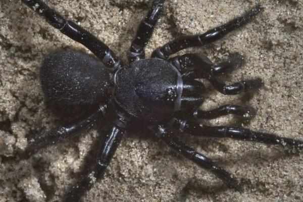 Βρήκε στο σπίτι του μια τεράστια μαύρη αράχνη - Δείτε τι έγινε μόλις τη φωτογράφισε (Video)