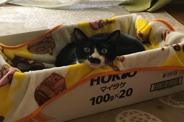 Αυτή η γάτα έχει πάνω στη μύτη της κάτι μοναδικό - Το σημάδι αυτό «ξεσήκωσε» το διαδίκτυο