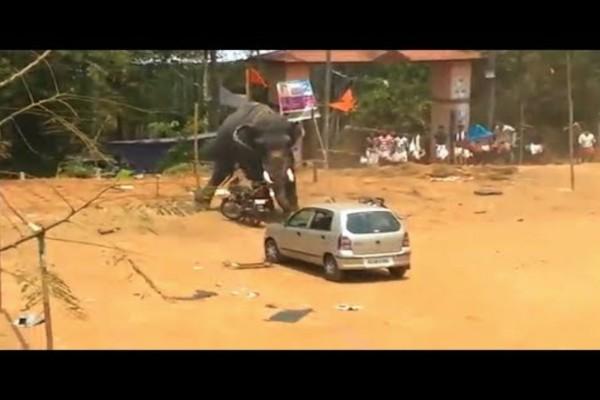Εξαγριωμένος ελέφαντας τρέχει με μανία - Αυτό που έγινε μόλις πλησίασε ένα αυτοκίνητο θα σας σοκάρει!