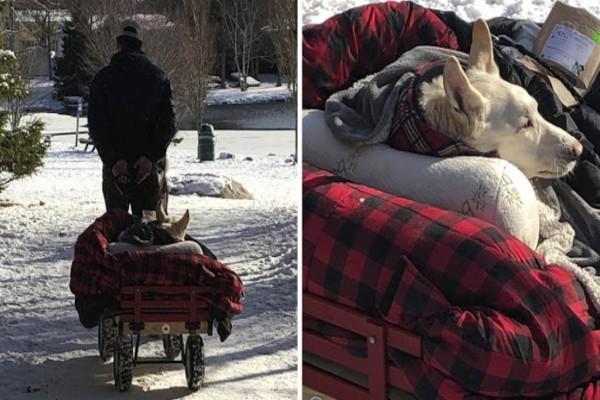 Αυτός ο παππούς έφτιαξε ένα καρότσι - κρεβάτι για τον σκύλο του - Ο λόγος θα σας κάνει να δακρύσετε