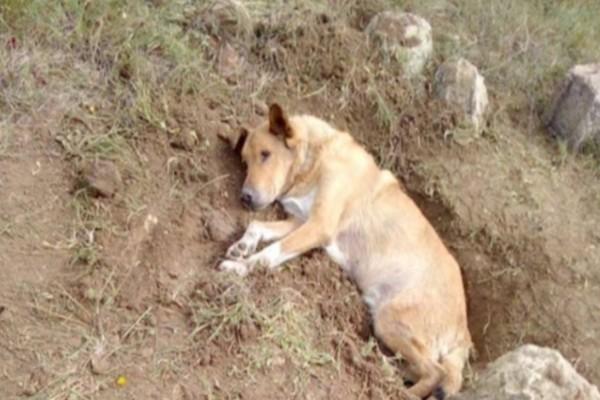Έθαψαν ζωντανό αδέσποτο σκύλο: Κτηνωδία