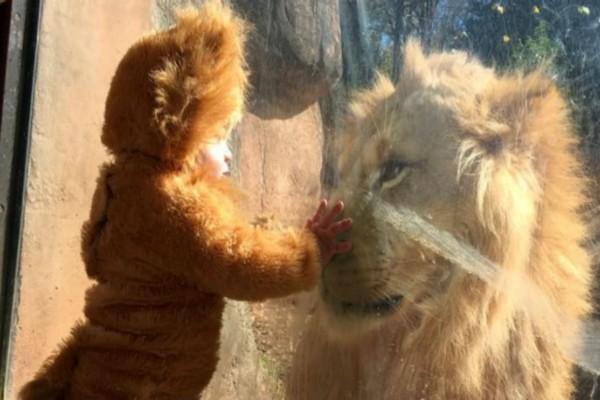 Έντυσαν το μωρό τους λιοντάρι και το πήγαν στο ζωολογικό κήπο - Αυτό που ακολούθησε θα σας αφήσει με το στόμα ανοιχτό