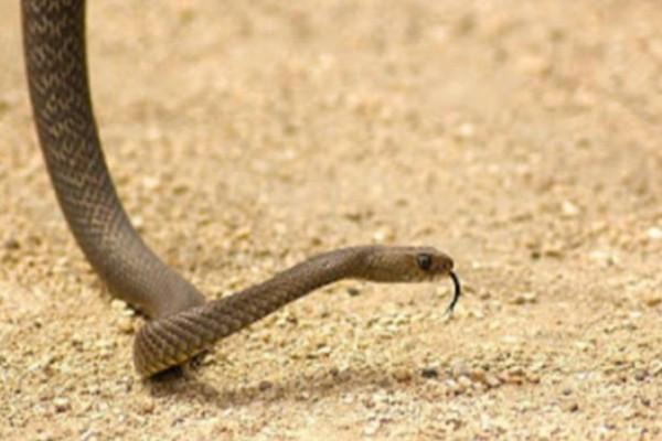Τι να κάνετε αν σας δαγκώσει φίδι ή σκορπιός: Απαραίτητες συμβουλές