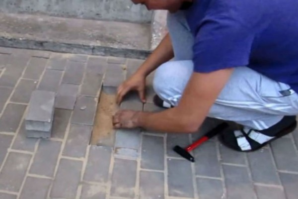 Ένας άνδρας άκουσε κλάματα να βγαίνουν από το έδαφος, ξεκόλλησε μερικά τούβλα από το πεζοδρόμιο και... αντίκρισε κάτι απίστευτο (Video)