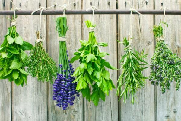 Αυτό είναι το αρωματικό, θεραπευτικό φυτό που θεωρείται το σύμβολο της ευτυχίας
