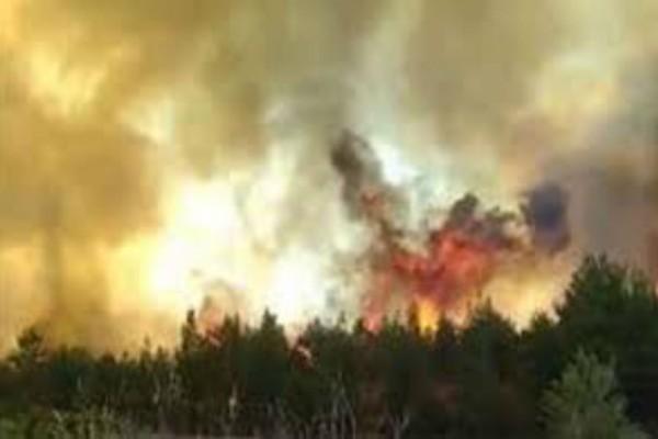 Ισχυρή πυρκαγιά στο Μαρτίνο Φθιώτιδας