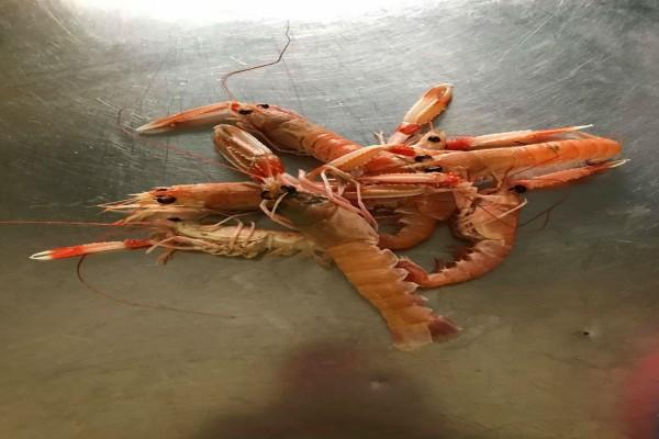 Το Βαγγ Ειρ φέρνει τη θάλασσα στο πιάτο σου!