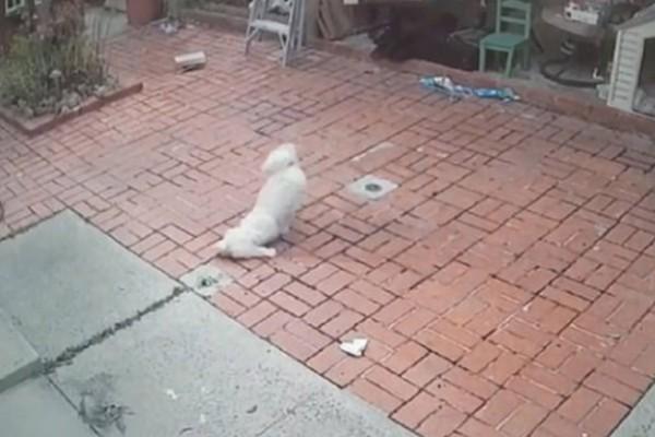 Κάμερα έπιασε 35χρονο άνδρα να ψεκάζει με σπρέι πιπεριού σκυλάκι! Αμέσως εκείνο σπαράζει από τον πόνο