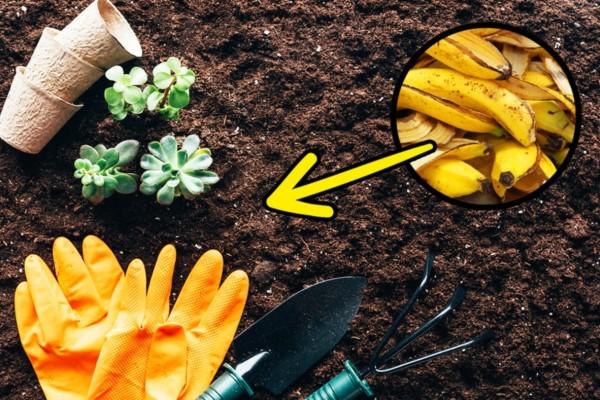Μην πετάτε τις φλούδες από τις μπανάνες - Βάλτε μια στον κήπο σας και θα πάθετε σοκ