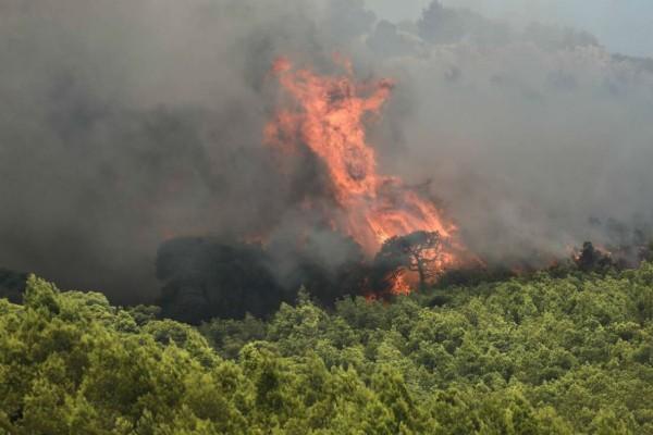 Συναγερμός στην Εύβοια: Φωτιά στην Κάρυστο (Video)