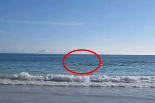 Τραβούσε βίντεο με την κάμερα του την παραλία όταν ξαφνικά συνέβη... Δεν μπορούσε να πιστέψει στα μάτια του (Video)