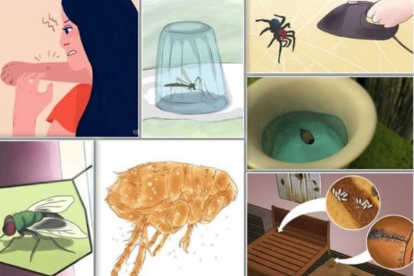 Εξαφανίστε άμεσα κουνούπια, μύγες και κατσαρίδες από το σπίτι σας με αυτό το φυσικό εντομοαπωθητικό (Video)