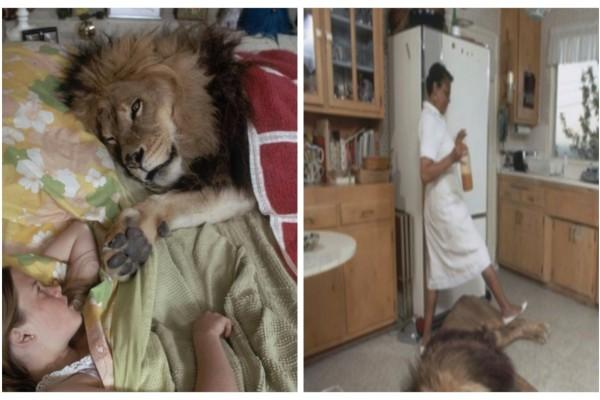 Το 1970 αυτή η οικογένεια είχε ένα λιοντάρι στο σπίτι της μέχρι που...Θα σας σοκάρει η ιστορία