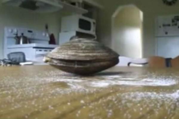 Έβαλε ένα μύδι πάνω σε ένα τραπέζι καλυμμένο με αλάτι - Η συνέχεια θα σας... καθηλώσει (Video)