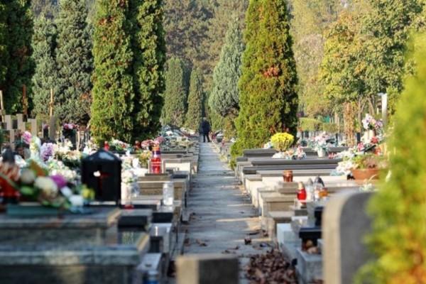 Αυτός είναι ο λόγος που φυτεύουν κυπαρίσσια στα νεκροταφεία - Ανατριχιάζει η ιστορία