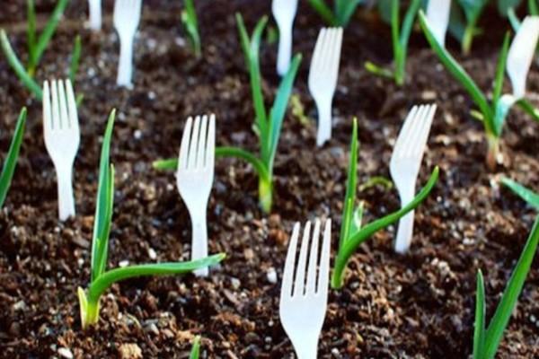 Γέμισε τον κήπο του με μια ντουζίνα πλαστικά πιρούνια - Ο λόγος είναι πανέξυπνος