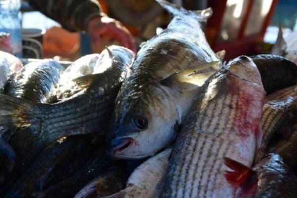 Κίνδυνος θάνατος: 9 ψάρια που θα ήταν καλύτερο να τα αποφεύγετε