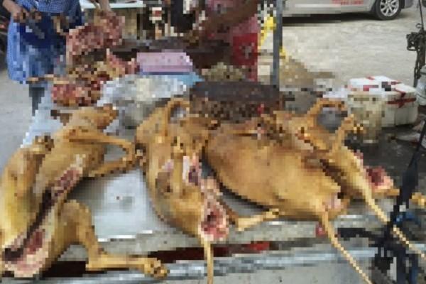 Εικόνες φρίκης στην Κίνα: Σφάζουν και ψήνουν ζωντανά σκυλιά για να τα φάνε (Video-Σκληρές εικόνες)