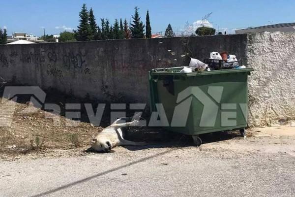 Θανάτωσαν σκύλο και τον πέταξαν στα σκουπίδια - Νέα κτηνωδία συγκλονίζει
