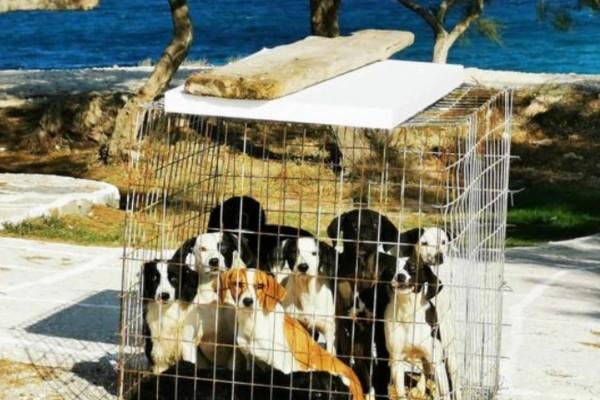 Τύπος παράτησε 9 σκυλάκια μέσα σε κλουβί - Λίγα λεπτά μετά αποκαλύπτεται η μεγάλη αλήθεια που σοκάρει!