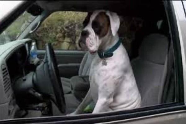 Άφησε το σκύλο του μέσα στο αυτοκίνητο - Αυτό που συνέβη μετά από δύο λεπτά είναι ξεκαρδιστικό