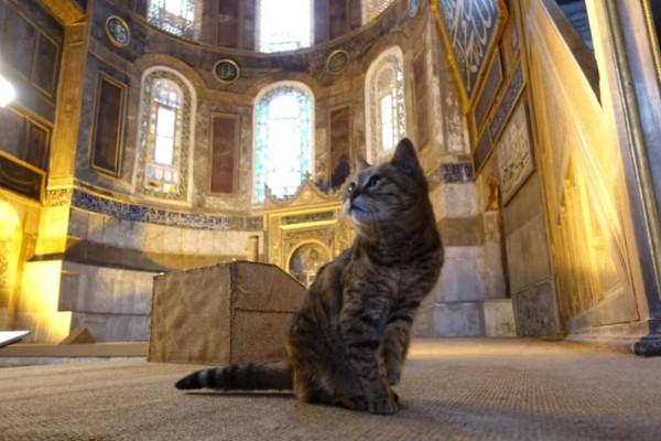 Γνωρίστε την Γκλι, τη γάτα που ζει πάνω από 14 χρόνια στην Αγία Σοφία στην Κωνσταντινούπολη