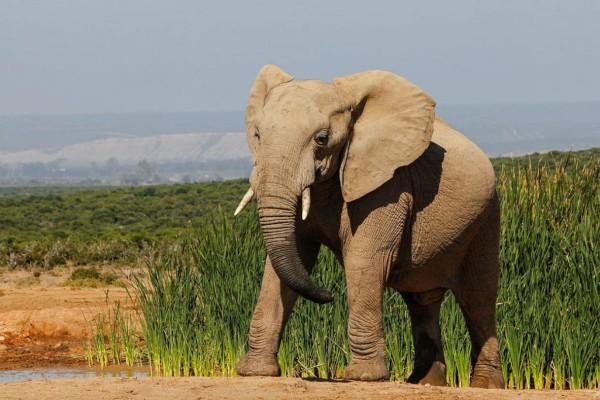 Πλήρωσε 60.000 ευρώ για μια βόλτα ανάμεσα σε ελέφαντες - Αυτό που συνέβη όταν τον πλησίασε ο μεγαλύτερος ακολούθησε κάτι τραγικό