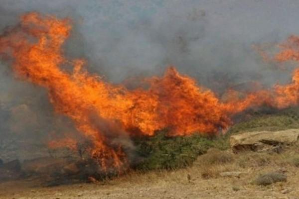 Φωτιά στην περιοχή Λάλας του δήμου Αρχαίας Ολυμπίας