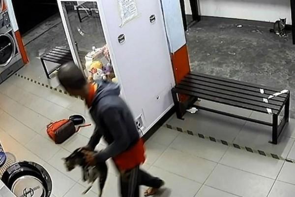 Κτηνωδία: Άνδρας δολοφόνησε 3 γατάκια - Τα έβαλε στο πλυντήριο μαζί με τα ρούχα (Video)