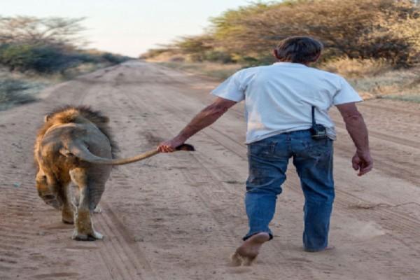 Άνδρας αρπάζει λιοντάρι από την ουρά... Αυτό που συνέβη στη συνέχεια είναι περίεργο