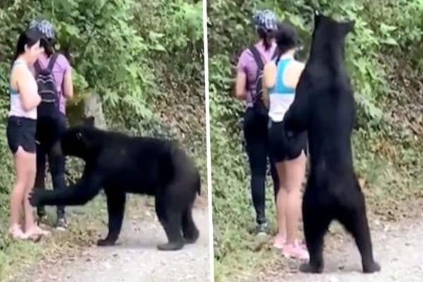 Μια αρκούδα πλησίασε τις κοπέλες που έκαναν πεζοπορία - Όταν η μια από αυτές πάει να βγάλει selfie...