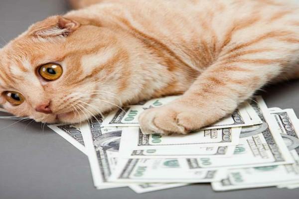 Άφησε δίπλα στη γάτα του ένα πάκο χαρτονομίσματα - Όταν επιχείρησε να τα πάρει...