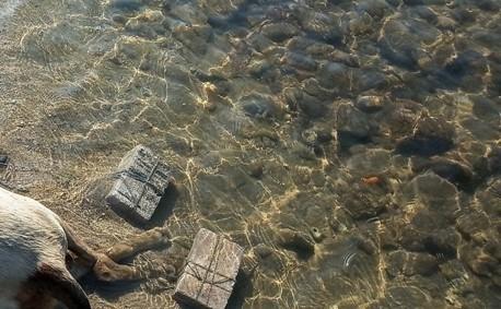 Έδεσαν σκύλο με πέτρες στο πόδι και τον πέταξαν στη θάλασσα: Κτηνωδία