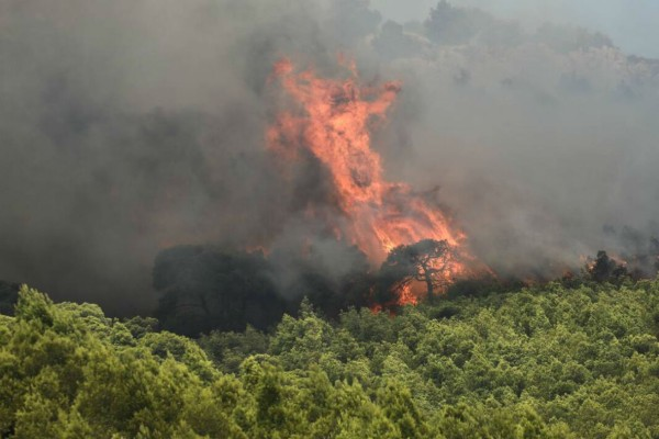 Φωτιά στην Κάρυστο: Συνελήφθη γυναίκα για εμπρησμό
